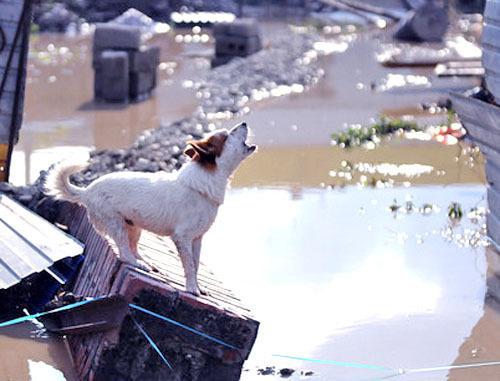 Наводнение в крымске краснодарский
