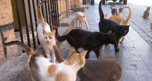 Бездомные кошки. Фото: KUSHI https://ru.wikipedia.org