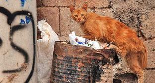 Бездомная кошка. Фото: Dûrzan Cîrano https://ru.wikipedia.org