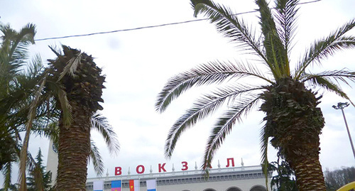 Пальмы около ЖД вокзала, которые поедают завезенные из Италии насекомые. Фото Светланы Кравченко