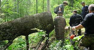 """Сотрудники """"ЭкоВахты"""" осуществляют мониторинг вырубки леса в районе реки Шумичка. Фото: http://www.ewnc.org/?q=node/356"""