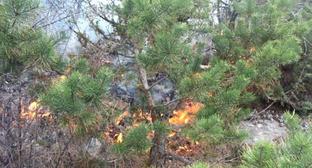 Пожар в лесу. Фото http://dagstudent.ru/