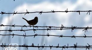 Птичка на колючей проволоке. Фото: http://rsonews.org/set/3l/004562.jpg