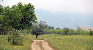 """скот пасется на горном пастбище. Фото Ахмеда Альдебирова для """"Кавказского узла"""""""