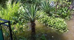 """Залитый водой сад во дворе частного дома. Фото Анны Грицевич для """"Кавказского узла"""""""