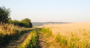 """Дорога вдоль пшеничного поля. Фото Ахмеда Альдебирова для """"Кавказского узла"""""""
