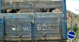 """Перевозка крупного рогата скота. Нагорный Карабах, июль 2015 г. Фото Алвард Григорян для """"Кавказского узла"""""""