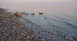Выброс рыбы на берег под Таганрогом. Август 2015 г. Фото: Евгений Королев http://mytaganrog.com/