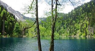 Рицинский реликтовый национальный парк. Фото: http://абхазия.рф/о-стране/география-и-природа/природные-заповедники/ррнп