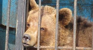 """Медведь из частного зоопарка в Гюмри. Фото Армине Мартиросян для """"Кавказского узла"""""""