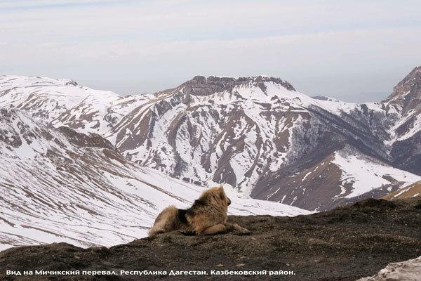 Климат Дагестана — Википедия